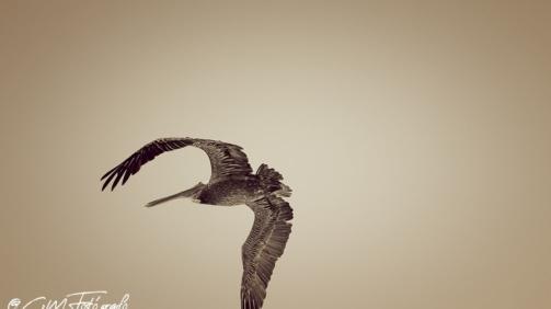 Volando #1