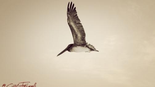 Volando #2