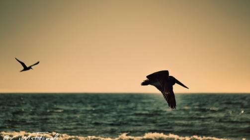 Volando #3