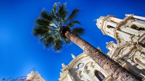 La palmera y la catedral